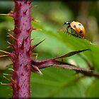 Ladybug by Rachael Smith