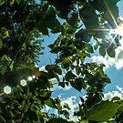 The Sun Will Rise 8 by Raina Watson