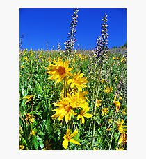 wild sunflowers Photographic Print