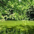 Laurelhurst Park by Walker Everette