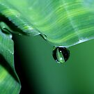 Wavy Green by Sharon Johnstone