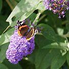 Butterfly by Gillen