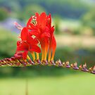 Red one by Gillen