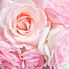 pink roses by SylviaCook