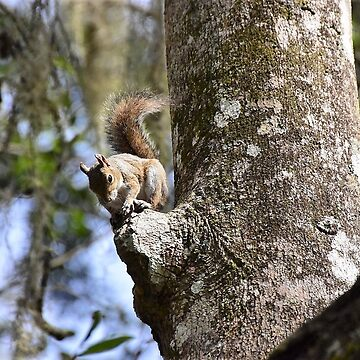 Squirell on a tree by pacoce1