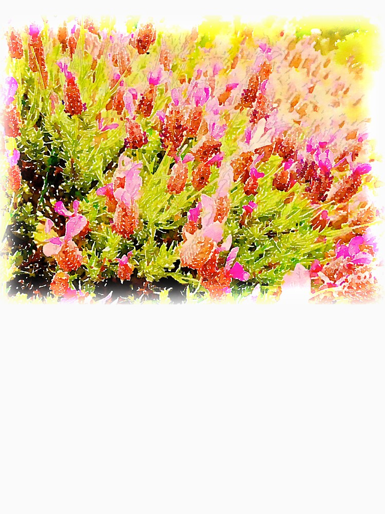 Lavender in Watercolor from A Gardener's Notebook by douglasewelch