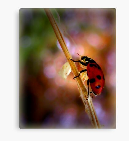 "Hey... a ""Bug"" Lady! Canvas Print"