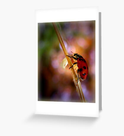 "Hey... a ""Bug"" Lady! Greeting Card"