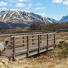 SHEEP CROSSING BRIDGE by RamblingTog