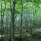 Forest Glade, Photograph by Vic Potter by Vic Potter