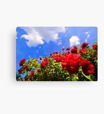 Roses and  Sky. Canvas Print