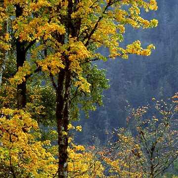 AUTUMN IN THE OLYMPICS by elainebawden