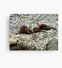 Otters Feeding Canvas Print