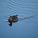 Duck in Water by HanieBCreations