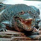 Gator by jakking