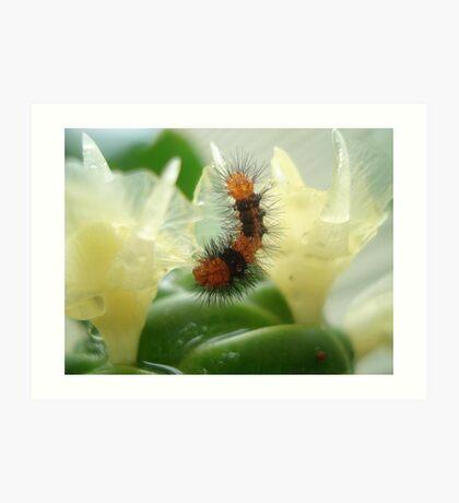 Little Chewi - Orange and black caterpillar Art Print