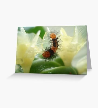Little Chewi - Orange and black caterpillar Greeting Card