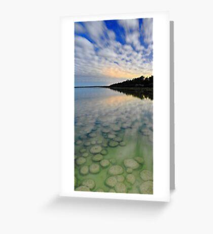 Lake Clifton Thrombolites Under Moonlight  Greeting Card