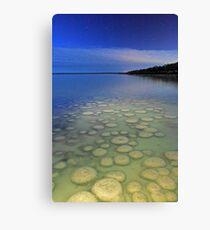 Lake Clifton Thrombolites Under Moonlight  Canvas Print