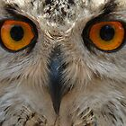 Eagle Owl is watching you by Fanny88Sheepy86