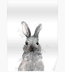 Hase, Poster