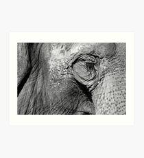 Elephant Eye-lashes Art Print