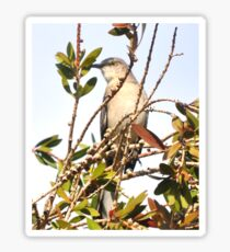 MOCKING BIRD IN A TREE Sticker