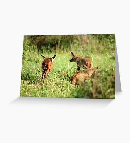 Bat-eared Fox - OTOCYON MEGALOTIS Greeting Card
