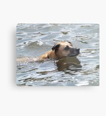 Dog Swimming in the Platte River, Denver, Colorado Metal Print