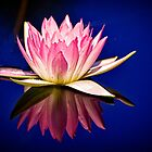 A Pink Jewel by cclaude