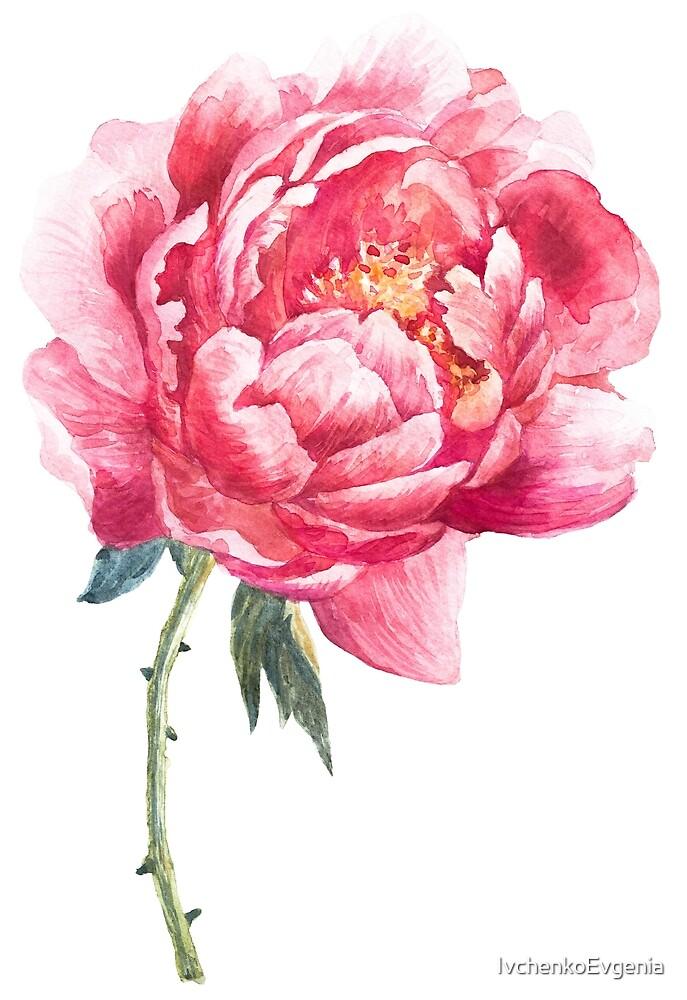 Watercolor peony by IvchenkoEvgenia