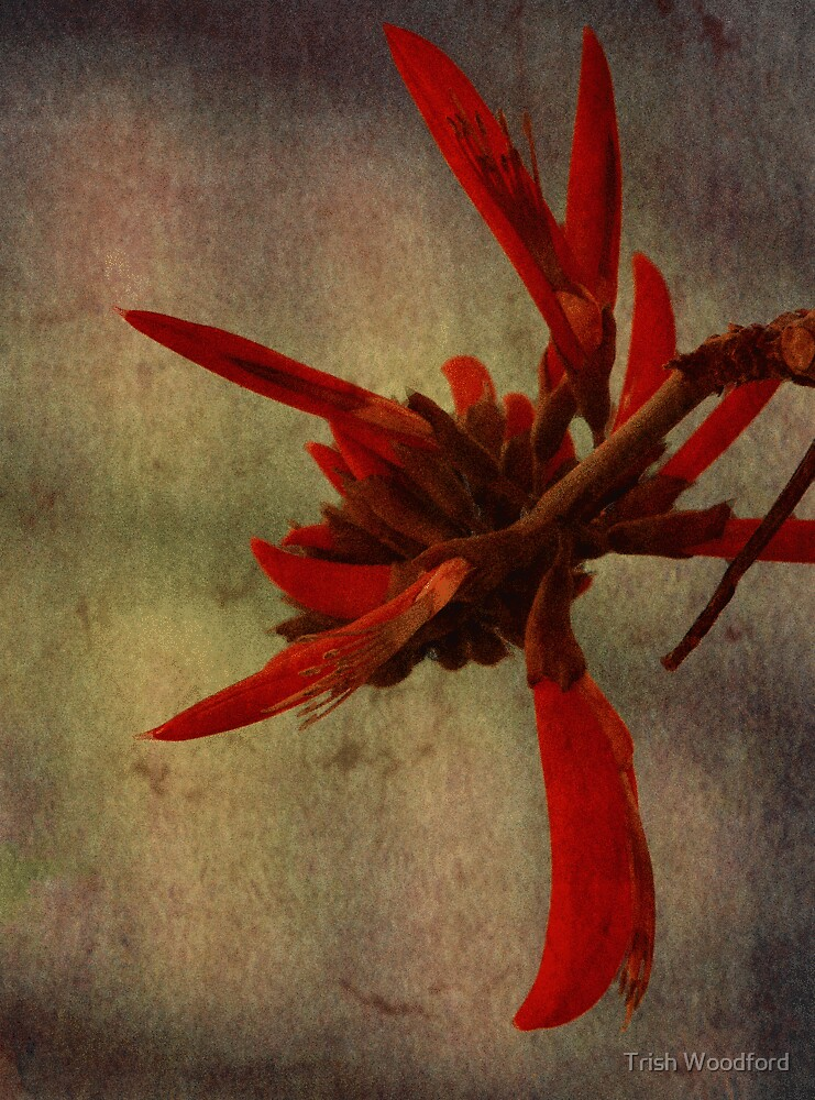 Flame Tree by Trish Woodford