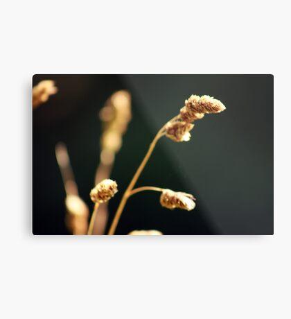Gorgeous Grass I Metal Print