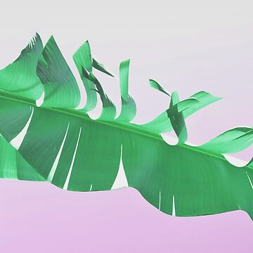 Banana leaf on pink by by-jwp