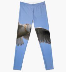 Black Shouldered Kite. Leggings