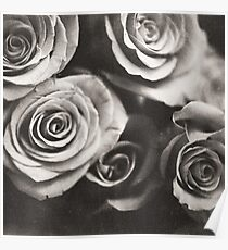 Medium format analog black and white photo of white rose flowers Poster