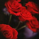 Analog photo of bunch bouquet of red roses by edwardolive