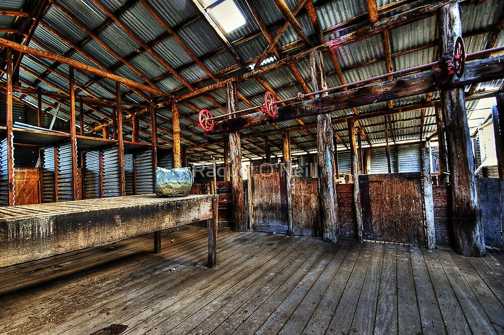 The Shearing Shed by Raquel O'Neill