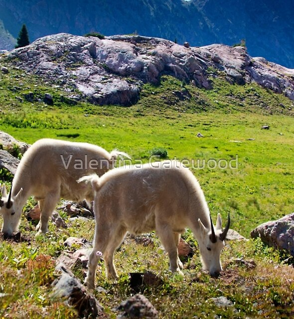 Two Goats by Valentina Gatewood