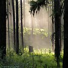 Enchanted Forest (Flathead National Forest, Montana, USA) by rocamiadesign