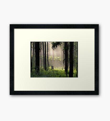 Enchanted Forest (Flathead National Forest, Montana, USA) Framed Print