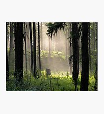 Enchanted Forest (Flathead National Forest, Montana, USA) Photographic Print