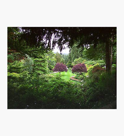 Sunken Garden No.3 Photographic Print