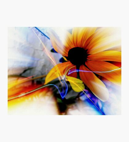Bloom Where Your Planted     Photographic Print