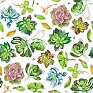 Colored pencil succulents by camcreativedk