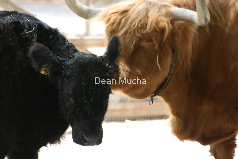 Telling Secrets by Dean Mucha