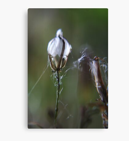 Like a Faberge egg (from wild flowers collection)  Canvas Print