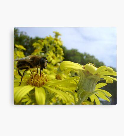Bee's World - honeybee close-up, vista of flowers Metal Print