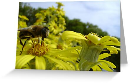 Bee's World - honeybee close-up, vista of flowers by armadillozenith