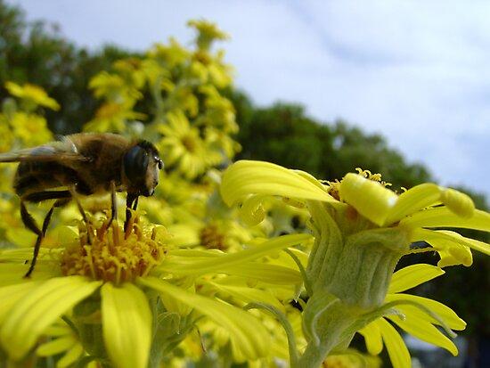 Bee's World - honeybee close-up, vista of flowers by armadillozenith